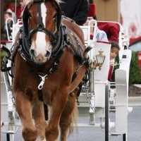 Glass Slipper Carriage Tours - Horse Drawn Carriage in Tuscaloosa, Alabama