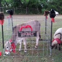 God's Little Critters - Pony Party in Denison, Texas