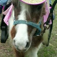 Hidden Creek Farms Pony Parties - Pony Party / Petting Zoos for Parties in Sebring, Florida