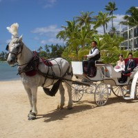 Honolulu Horse and Carriage - Horse Drawn Carriage in Honolulu, Hawaii