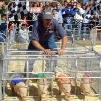 Hot Dog Pig Racing - Petting Zoos for Parties in Trenton, New Jersey