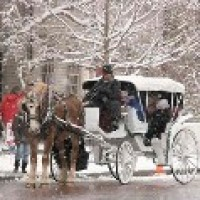 Irish Acres Carriage Company - Horse Drawn Carriage in Noblesville, Indiana