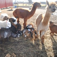 June Bug Ranch Pony Rides & Petting Zoo - Petting Zoos for Parties in Muskegon, Michigan