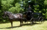 Horse drawn hearse Detroit mi