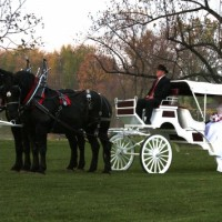 Lanzelot Promenades - Horse Drawn Carriage in Readington, New Jersey
