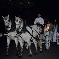 M M Carriage Company - Horse Drawn Carriage in Shreveport, Louisiana