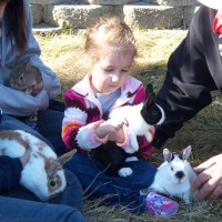 McDonnys  Traveling   Farm - Petting Zoos for Parties in North Andover, Massachusetts