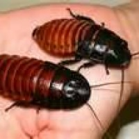 Mini-Beast Live Insect Presentation - Petting Zoos for Parties in Medford, Oregon