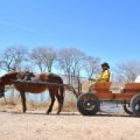 Natural Horse Sense - Horse Drawn Carriage in Santa Fe, New Mexico