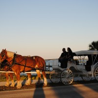 New Beginnings Horse & Carriage Services - Limo Services Company in Vero Beach, Florida