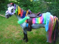 New Hampshire Pony Parties