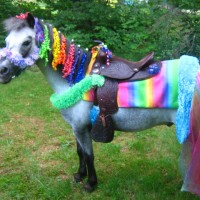 New Hampshire Pony Parties - Unique & Specialty in Rutland, Vermont