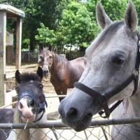 Noah's Landing Petting Zoo & Pony Rides - Educational Entertainment in Gainesville, Florida