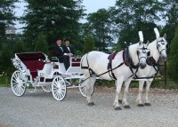 Our American Dream Farm llc. - Horse Drawn Carriage in Readington, New Jersey