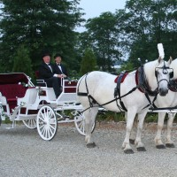 Our American Dream Farm llc. - Horse Drawn Carriage / Princess Party in Cream Ridge, New Jersey