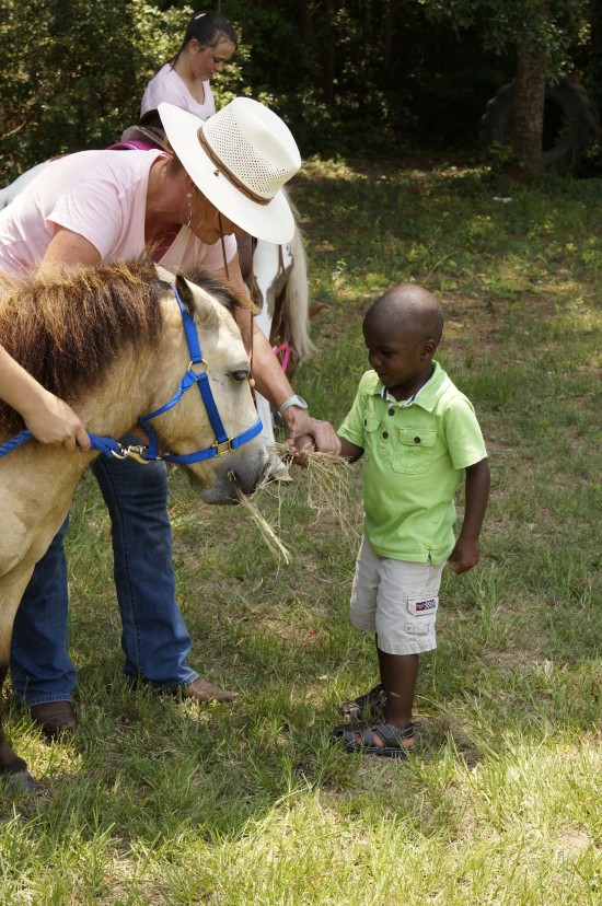 Palmetto Ponies & Pets - Getting to Know the Ponies
