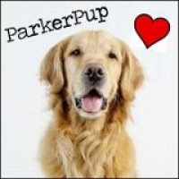 ParkerPup - Animal Entertainment in Beaverton, Oregon