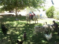 Ponies N' Critters - Pony Party in Santa Ana, California