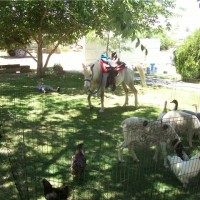 Ponies N' Critters - Pony Party in Glendora, California