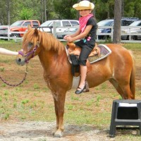 Pony Tails Farm - Pony Party in New Port Richey, Florida
