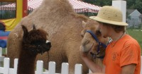 Pony To Go - Petting Zoos for Parties in College Park, Maryland