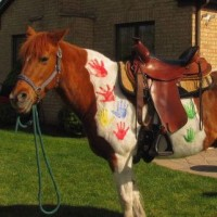 Pretty Ponies for Parties - Unique & Specialty in Romeoville, Illinois