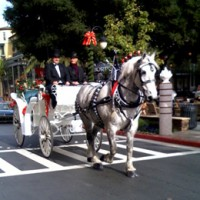 Redwood Mountain Percherons - Horse Drawn Carriage in San Jose, California