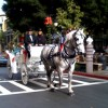 Redwood Mountain Percherons