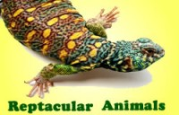 Reptacular Animals - Reptile Show in Long Beach, California