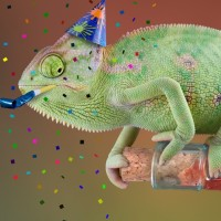 Reptile Safari Parties - Petting Zoos for Parties in Daytona Beach, Florida
