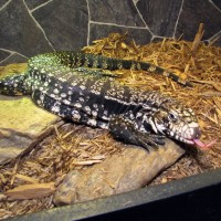 Reptilepartywny - Petting Zoos for Parties in Buffalo, New York