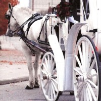 Rosewood Carriage Rides - Holiday Entertainment in Huntington, Indiana