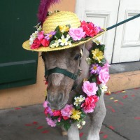 Rowdy's Rascals Pony Parties & Petting Zoo - Educational Entertainment in Lafayette, Louisiana