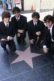 The Hollywood Beetles