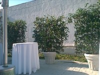 San Francisco Plant Rental San Jose Service - Party Rentals in San Francisco, California