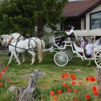 Spruce Hill Carriages - Horse Drawn Carriage in Colorado Springs, Colorado