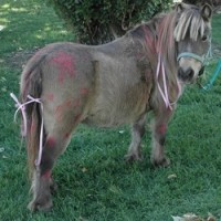STAR ponies for parties - Pony Party in Sunnyvale, California
