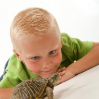 The Turtle Show - Educational Entertainment in Atlantic City, New Jersey