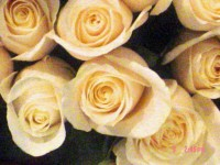 Wedding/Event Planner - Wedding Florist in ,