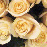 Wedding/Event Planner - Event Florist / Wedding Florist in South Bend, Indiana