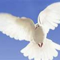 Whitewings of Gulfwinds - Dove Release / Event Planner in Elberta, Alabama