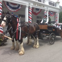 Wild Iris Farm Carriage Rides - Horse Drawn Carriage in Waterville, Maine