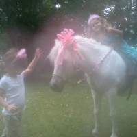 Wind Dance Party Ponies - Petting Zoos for Parties in Philadelphia, Pennsylvania