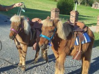 Xtreme Team Stables - Children's Party Entertainment in Asheboro, North Carolina