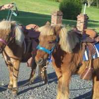 Xtreme Team Stables - Petting Zoos for Parties / Children's Party Entertainment in Albemarle, North Carolina