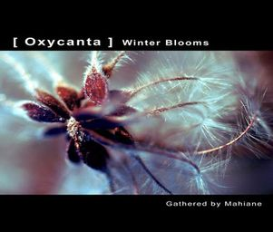 Subgardens_oxycanta_winter_blooms