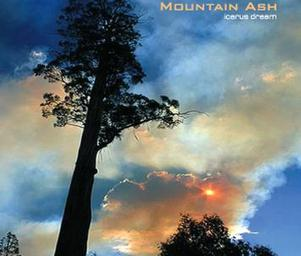 Mountain_ash