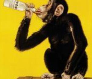 Drunken_monkey_drunkenmonkey
