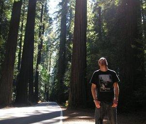 Dextro__forest