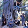 Penguin_cafe_orchestra_penguin_cafe